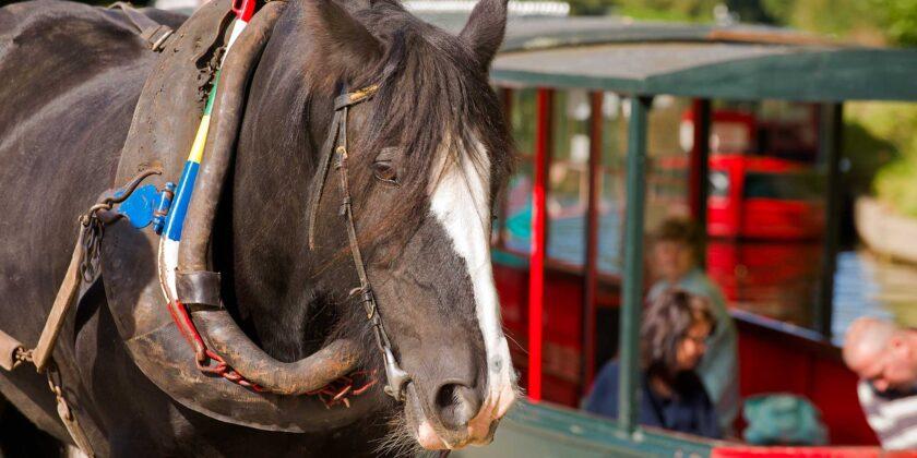 *boat and horse at Llangollen Wharf