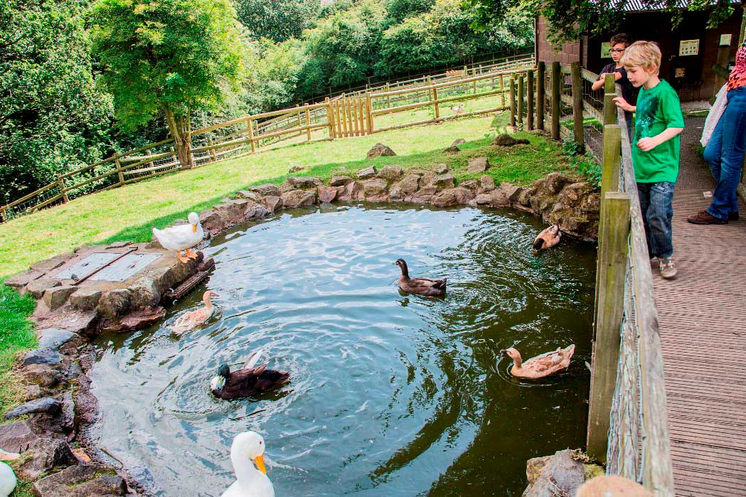 *duck pond at ty mawr