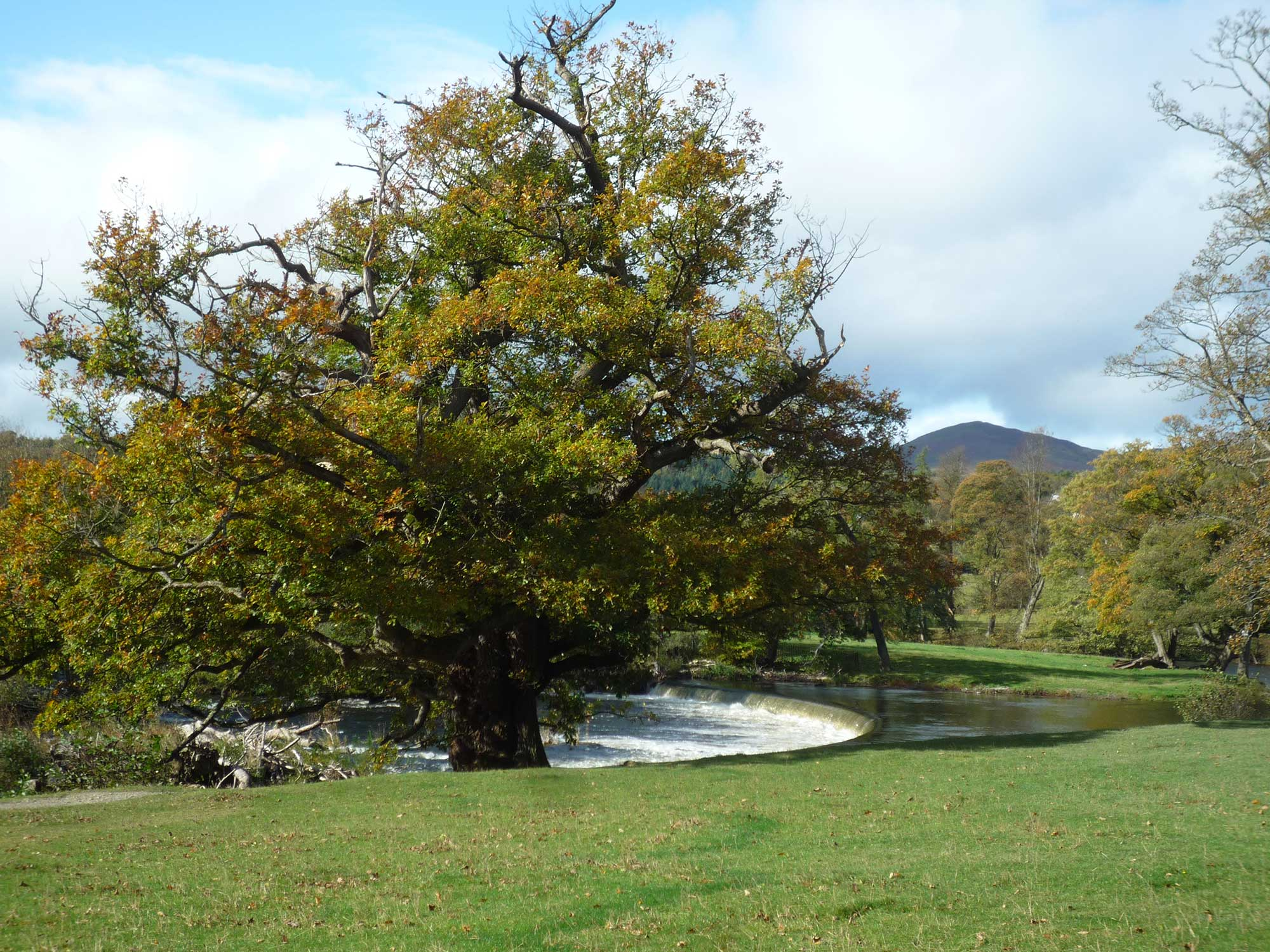 *meadow and horseshoe falls
