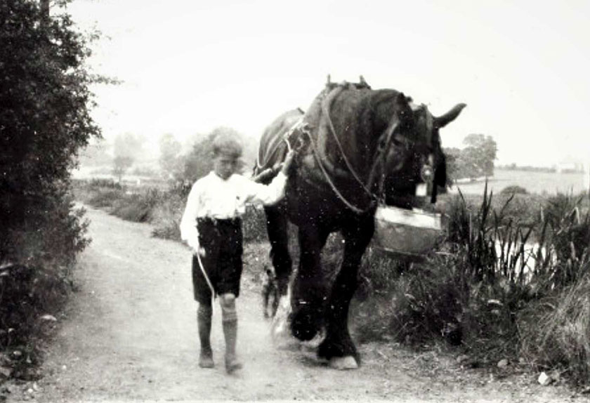 Child with horse
