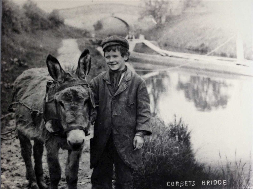 Donkeys on the canal