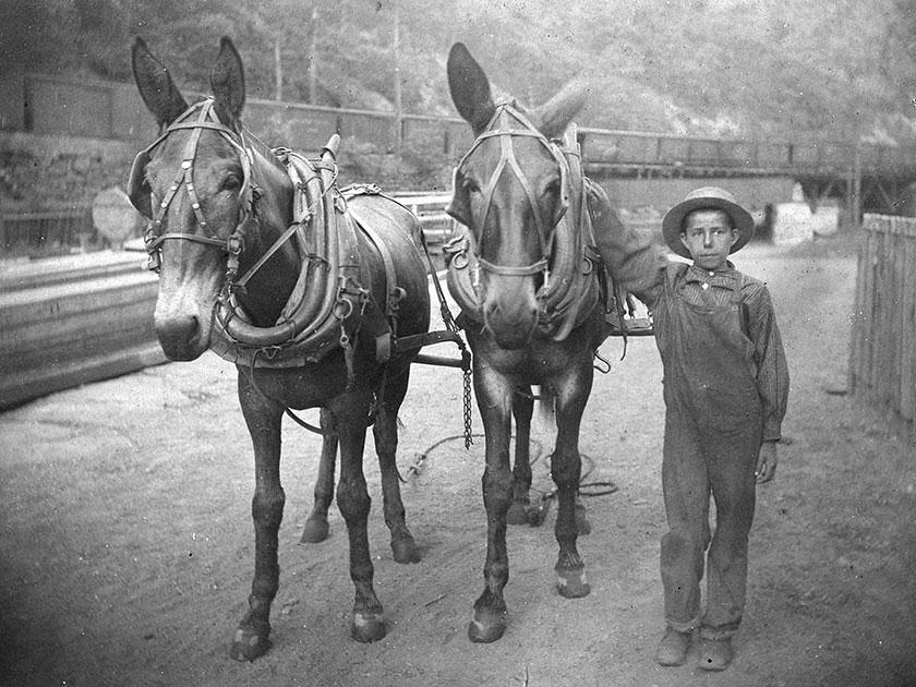 US mules