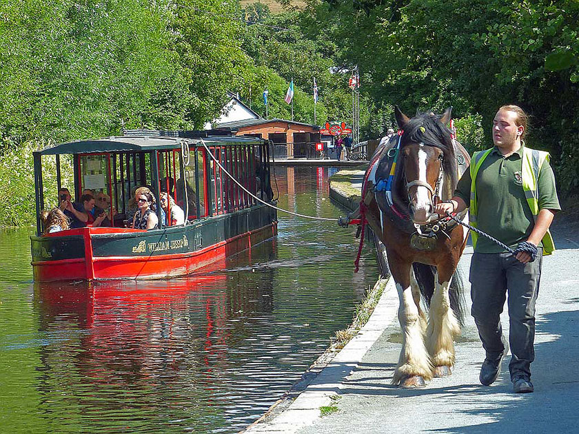 Cwch fodern yn cael ei thynnu gan geffyl Modern horse drawn boat